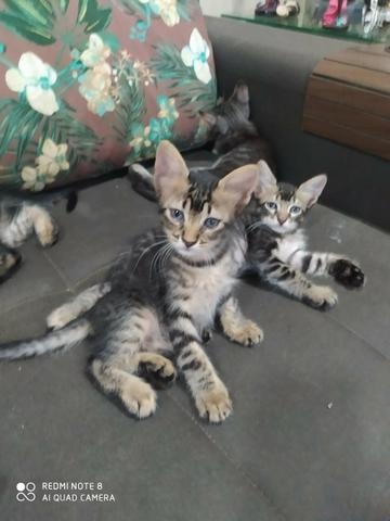 Doação de gatinho e gatos castrados