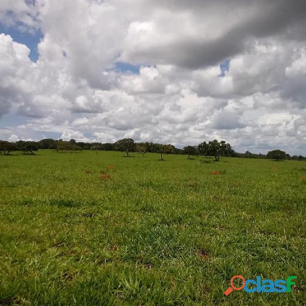 20 alqs planta 12 região de soja piracanjuba go