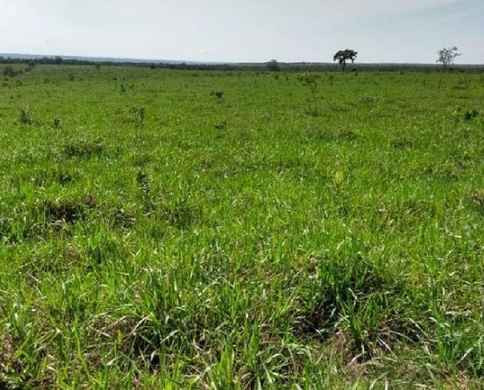 Oportunidade fazenda com 1.400 hectare em campos de julio mt
