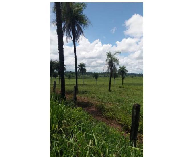 800 alqs culturão tem 8 mil bois solo preto na bacia do