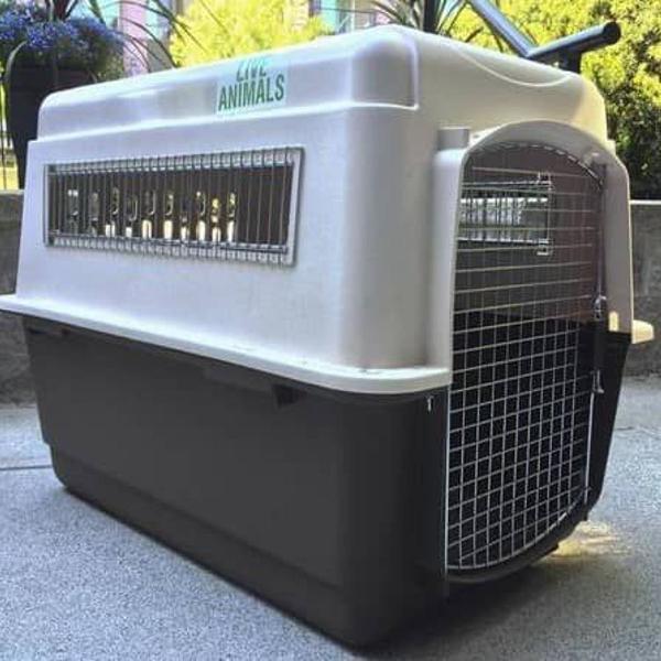 Caixa de transporte para cães (gigante)