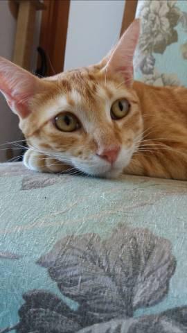 2 gatos castrados para adoção responsável