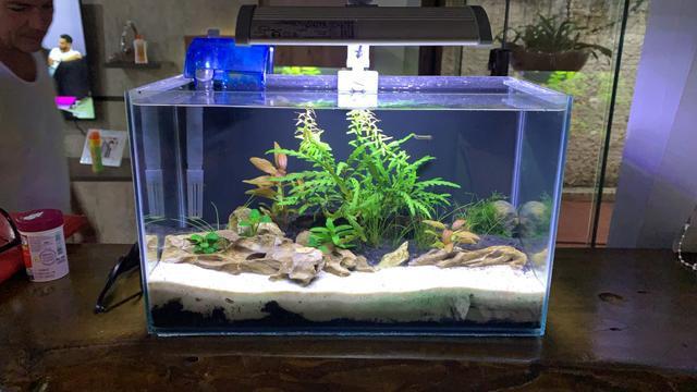 Aquário nano plantado 10l - completo