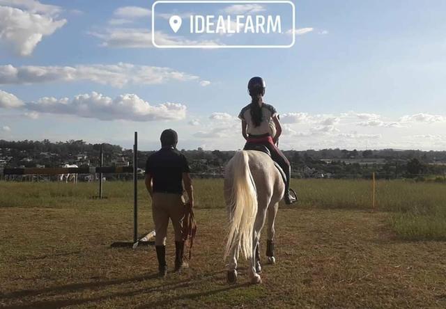 Aulas de equitação passeios hipismo venda de cavalos
