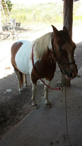 Cavalo petição manso