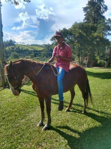 Cavalo manga larga manso zap *