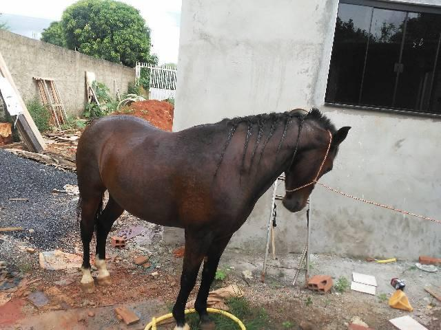 Cavalos manga larga
