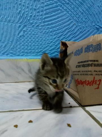 Doação de 2 filhotes de gato