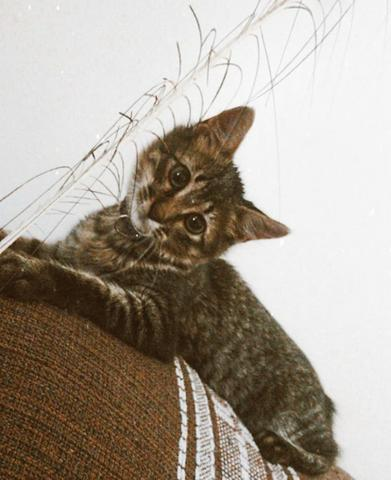 Doação de gatinha