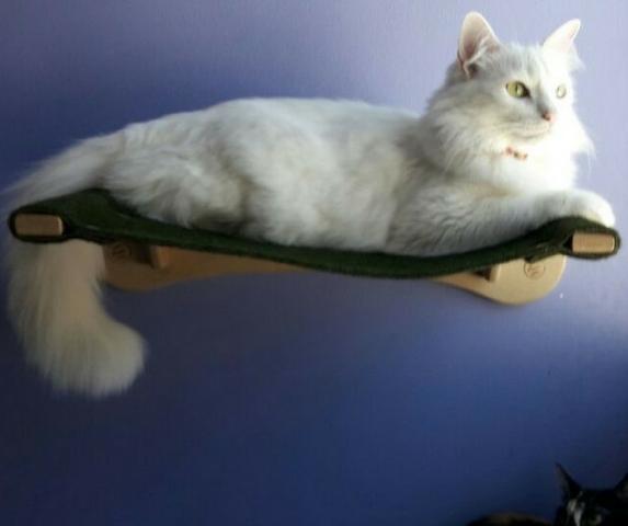 Prateleira para gato - cama + 3 prateleiras em mdf e carpete