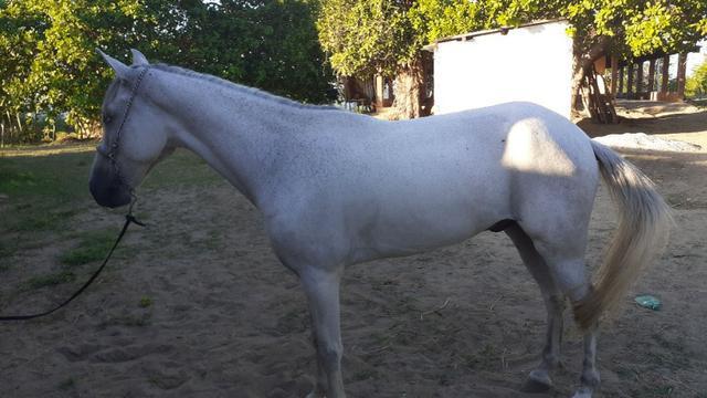 Vdo cavalo manga larga marcha picada 82 9 *