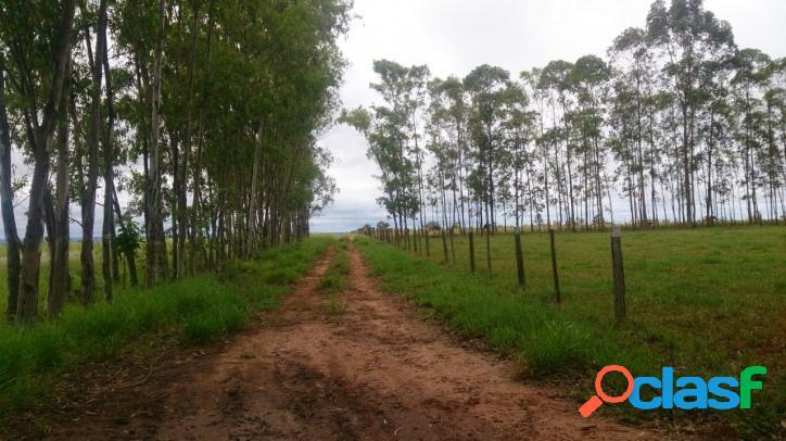 Fazenda na região de tangará da serra-mt- área com duas matrículas- toda documentada - total 1309 hectares- área aberta que já foi plantada arroz e s