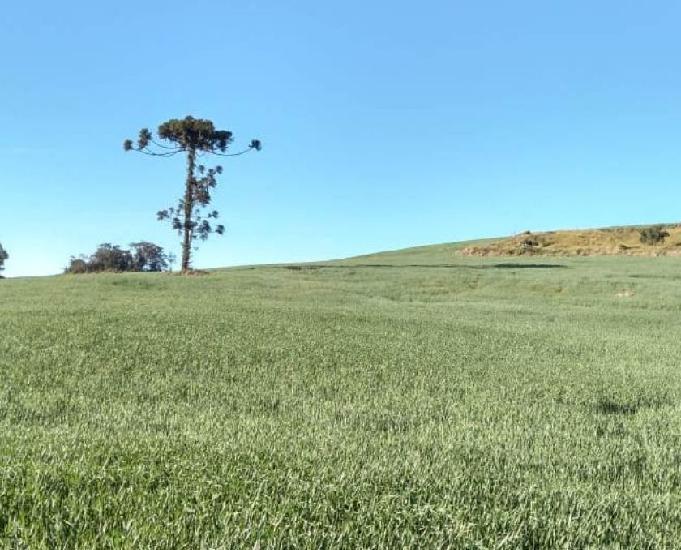 Excelente fazenda com 212 alq na região de mauá da serra