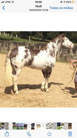 Cavalos e éguas business add aqui !!!