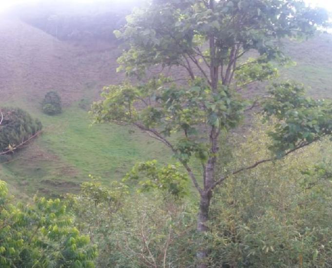 Sitio perto do expominas jf aceito permuta com 2 hectares