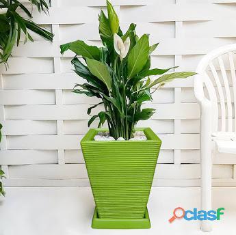 1 Vaso + Prato Polietileno P/ Plantas Flores Jardim Q 45x35 1