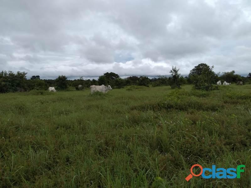 150 Alqs Plana Região De Lavoura Lizarda TO 2