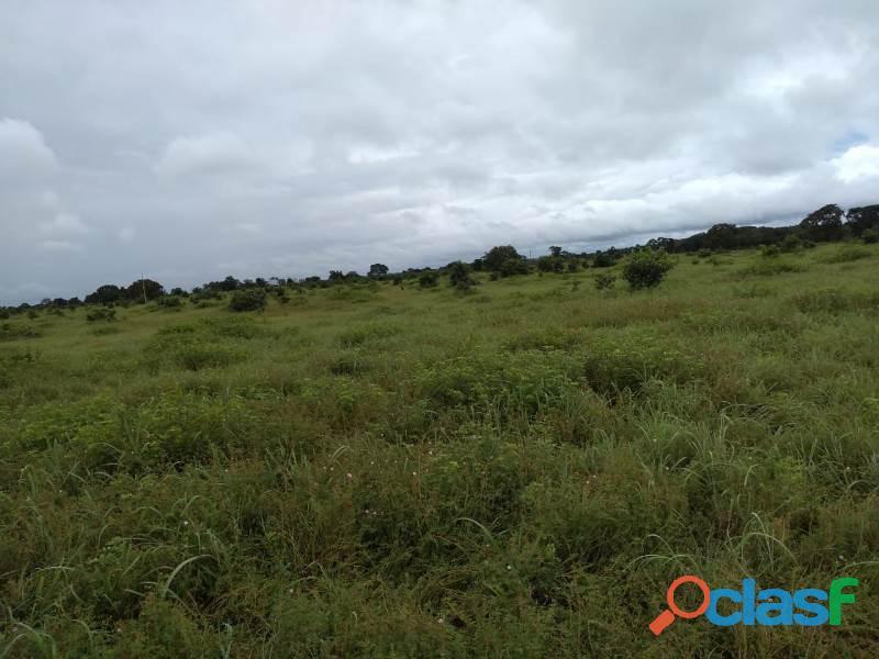 150 Alqs Plana Região De Lavoura Lizarda TO 4
