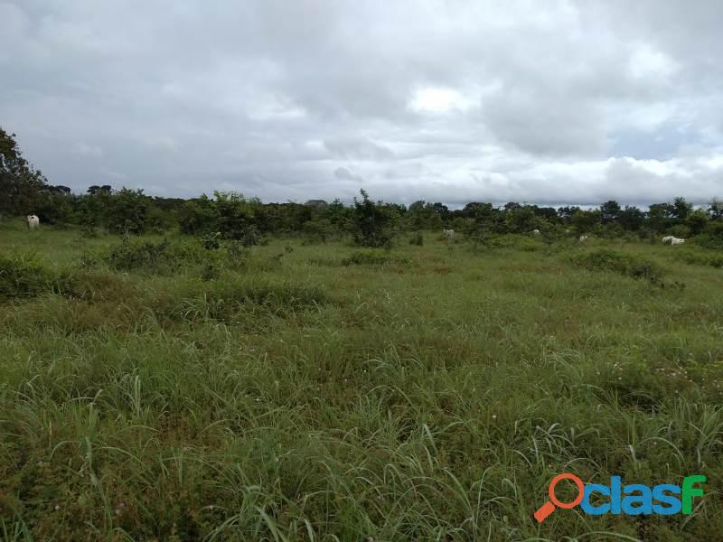 150 Alqs Plana Região De Lavoura Lizarda TO 5