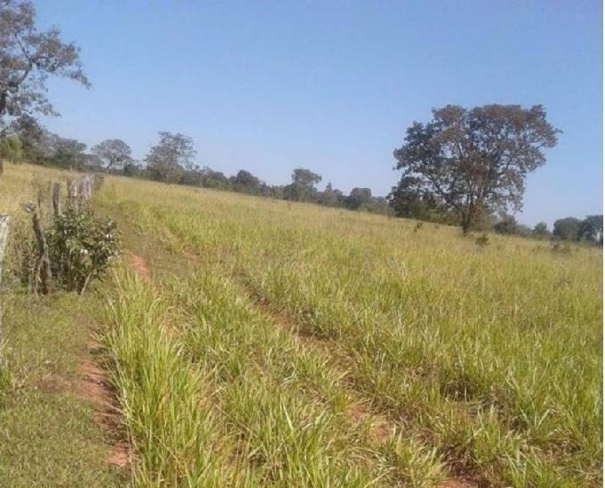 Oportunidade de fazenda com 500 alqueires em anaurilândia