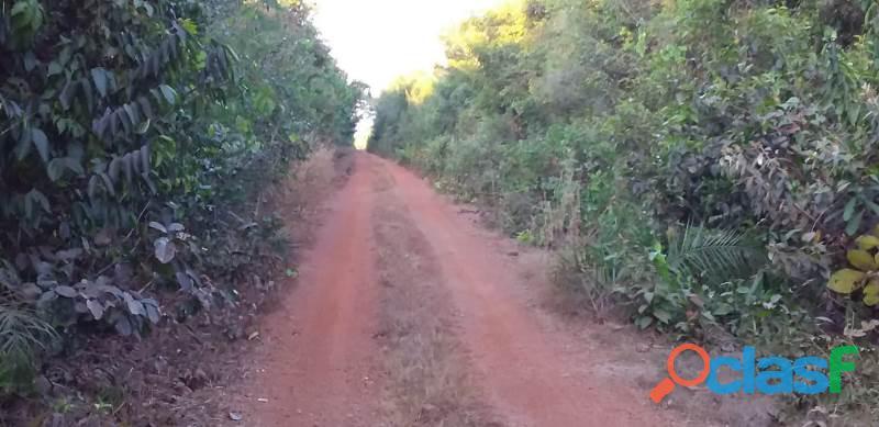 246 Alqs P. Soja Avermelhada Foi Aberta Araguacema TO 2