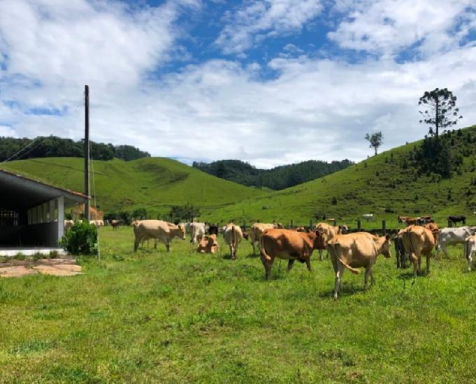 Fazenda com 115 ha em anitápolis, santa catarina
