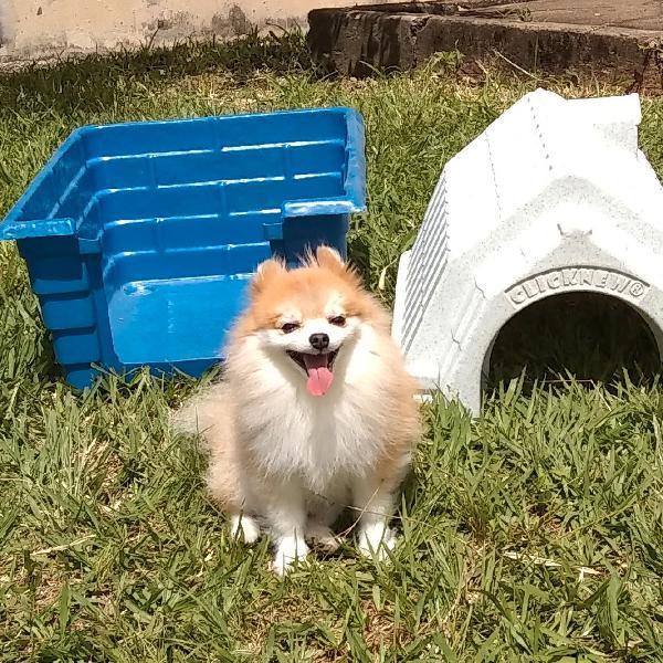 casinha para cachorro de plástico desmontável