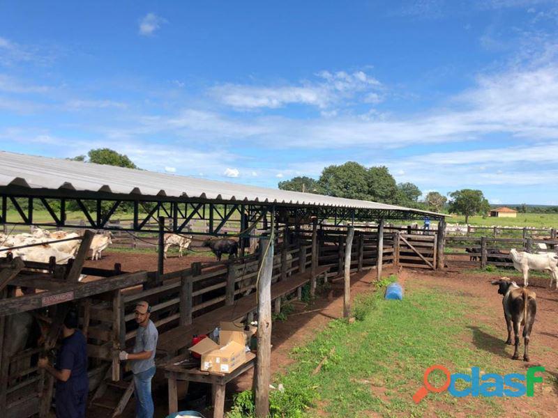 375 alqs dupla aptidão formada rica d água araguaçu to