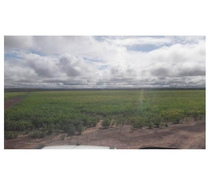 392 alqs 87 soja planta 104 rio sono to