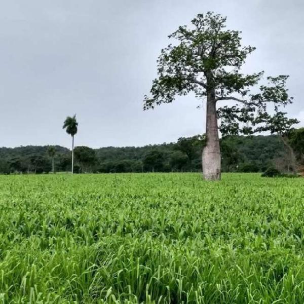 Fazenda matão em nova roma-go