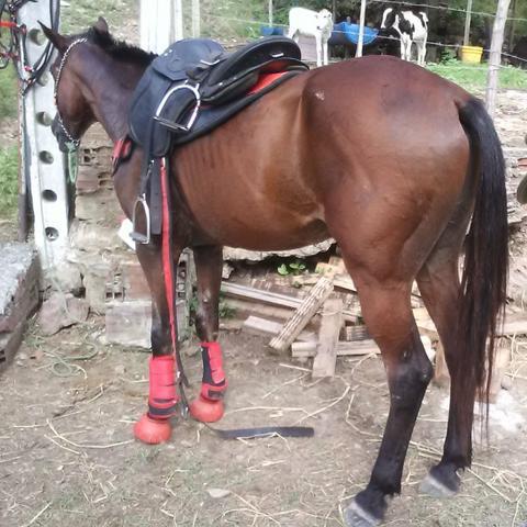 Cavalo de esteira. 8 anos