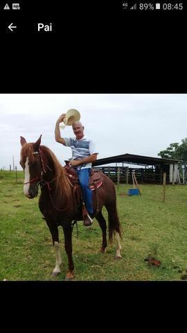 Cavalo manga larga paulista registrado
