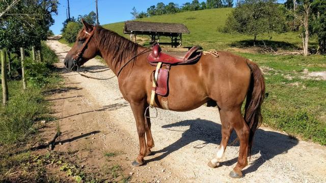 Lindo cavalo ideal para família
