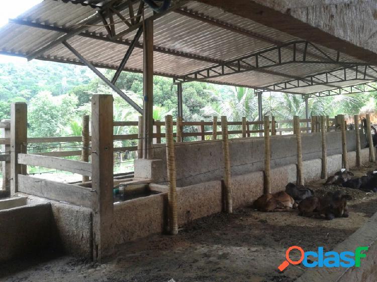 Fazenda - venda - teofilo otoni - mg - rural