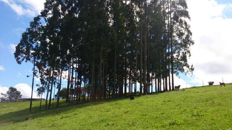 Campo largo - itambé - 45 km curitiba- 52 alqueires - 125