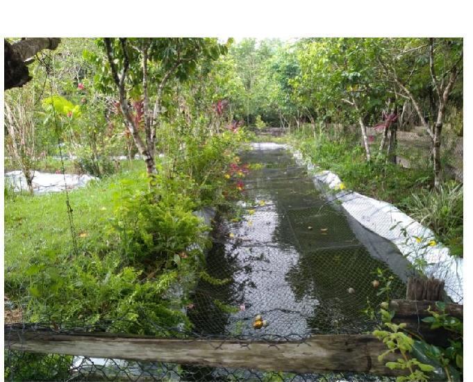 R$ 150 mil reais sitio com 3 hectares, escriturado a 23 km