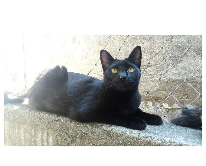 Pérola, linda e amorosa gatinha, já castrada!