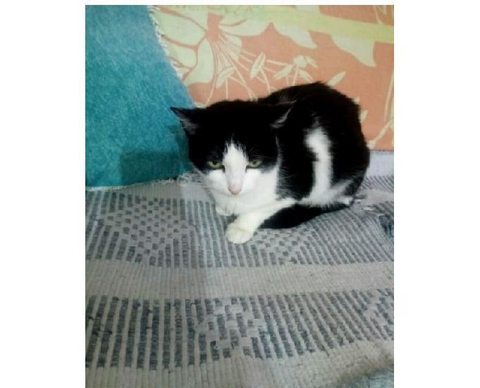 Sofia, linda gatinha já castrada para adoção!