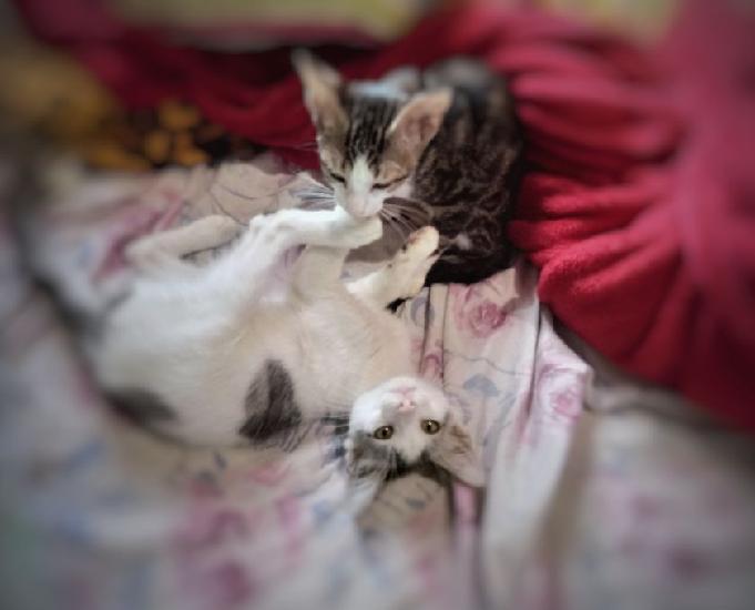 Lindo casal de gatinhos, desverminados e aptos à adoção!
