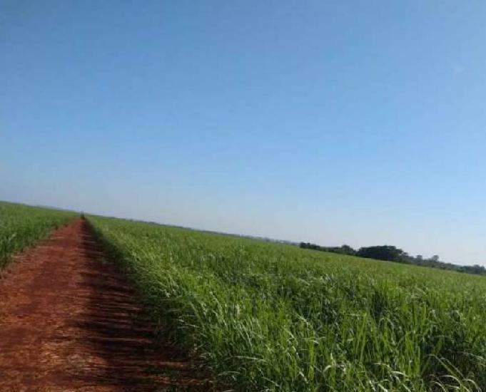 Excelente fazenda com 1.179 hectares em rio brilhante ms