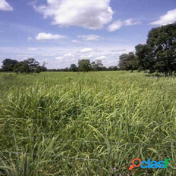 Fazenda a venda em paracatu mg 200 ha 41 alq. agricultura pecuária
