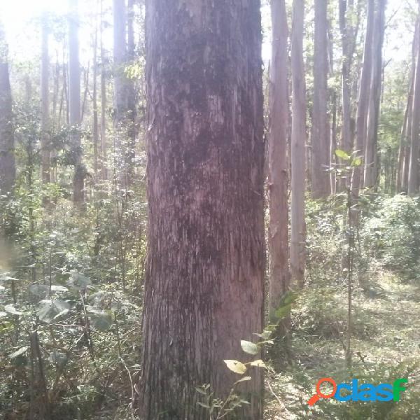 Bom jardim de minas - mg - fazenda 565 ha. com 150 mil m³ de eucaliptos