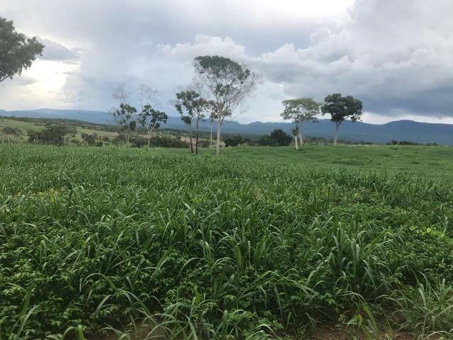 Fazenda 1.455 hectares município de poconé mt (pecuaria)
