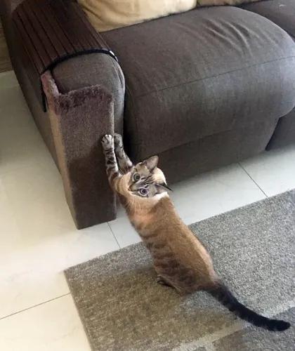 Arranhador gatos protetor sofá - kantofá 2020 - várias