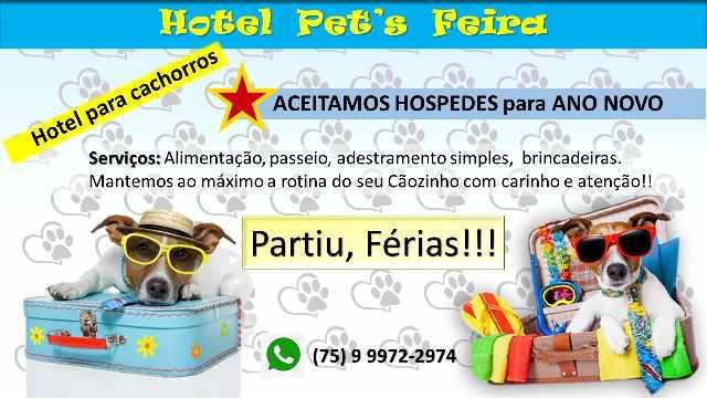 Hotel e creche para cachorros