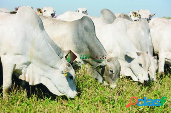 Fazenda 700 hec. dupla aptidão c/ predominância pecuária