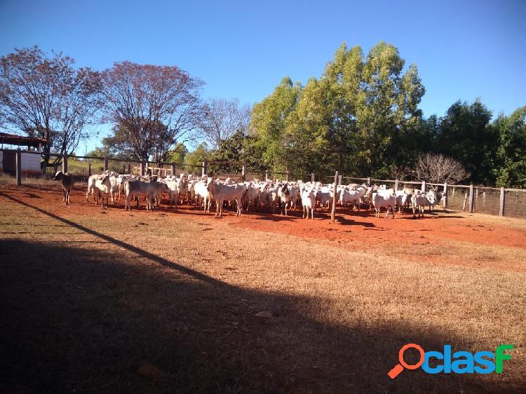 Excelente fazenda para pecuária em engenheiro navarro - 800 ha