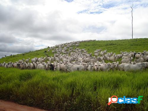 Fazenda de 149.132 hectares em rondolândia-mt