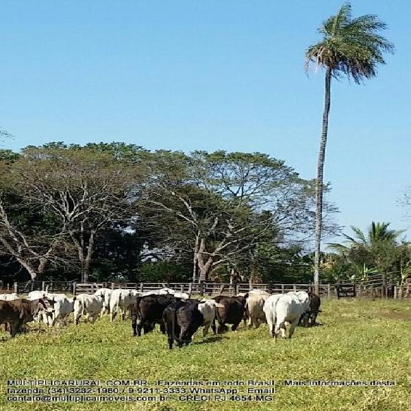 Fazenda em uberlândia mg - 82,03 hectares aceita parte