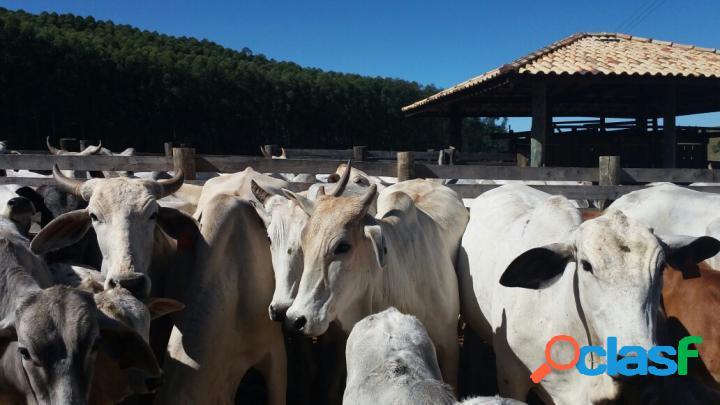 Fazenda à venda em lagoinha / sp 40 alqueires